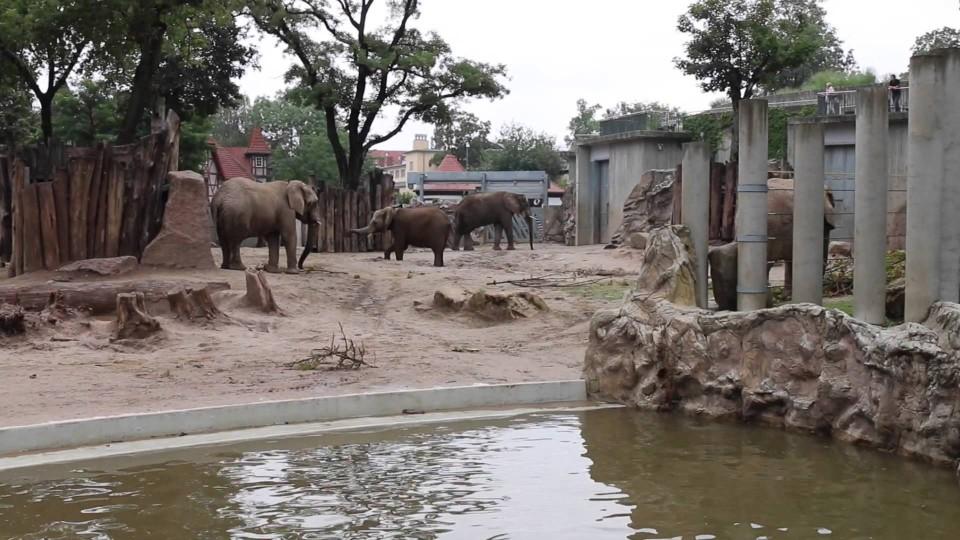 zoo halle preise