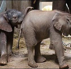 Foto Babyfanten 2016