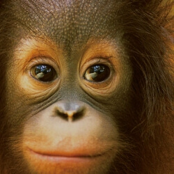 Bühnenbild Borneo