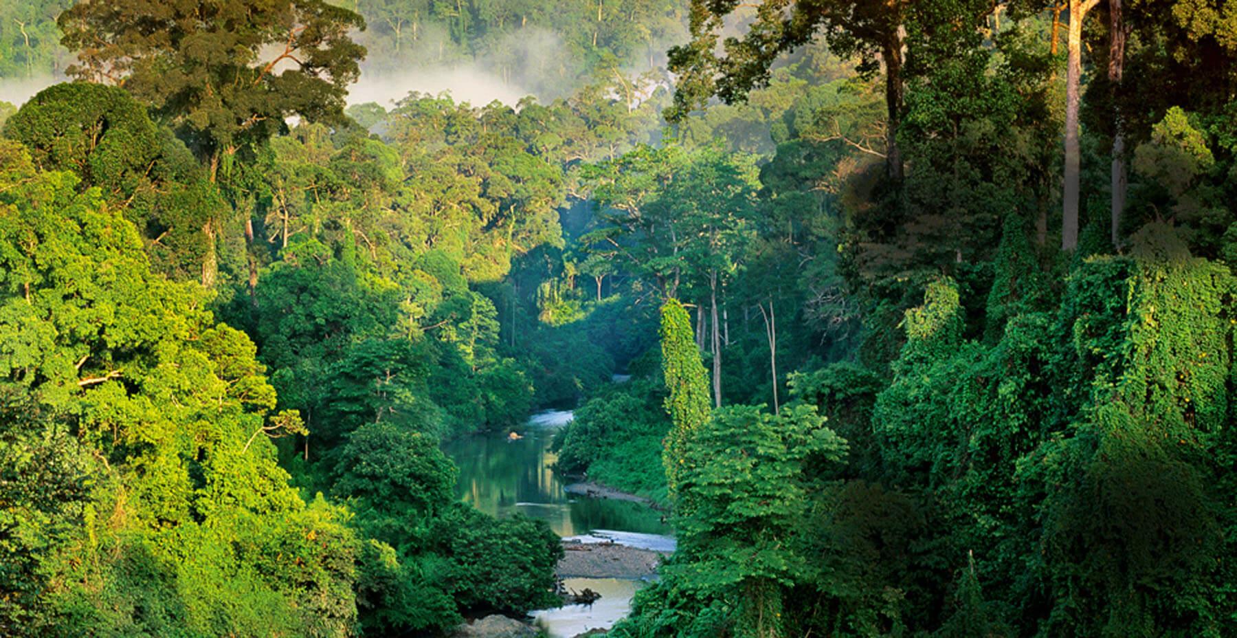 Borneo Danum Valley