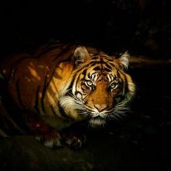 Der Dschungel Ruft Bühnenbild