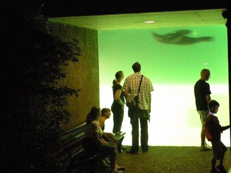 Nachts Im Zoo Artikelbild 2