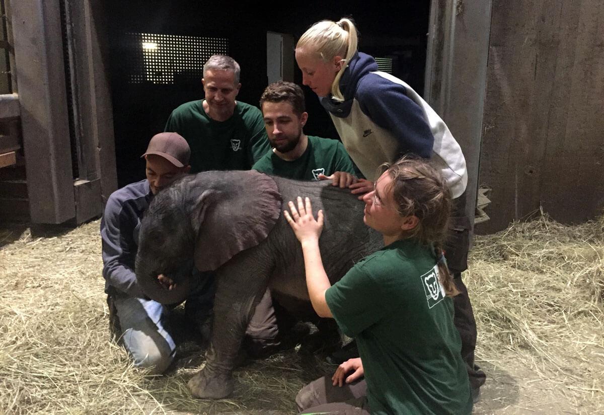Artikelbild 1 Elefantengeburt – Nach Der Geburt