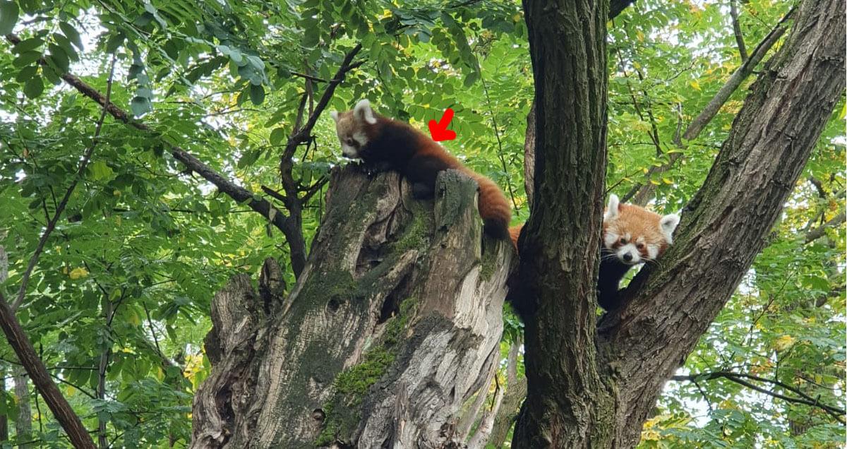 Panda Artikelbild 2